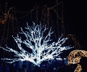 decoration, lights, and winter image