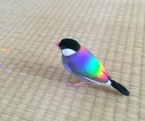 bird, rainbow, and animal image