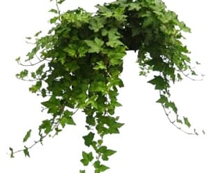 plant, png, and transparent image