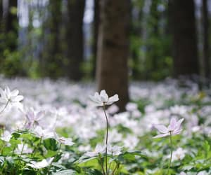 flowers, forest, and photo image