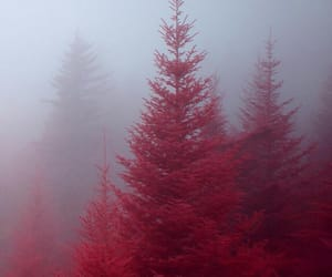 red, tree, and fog image