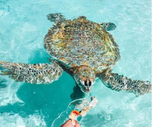 turtle, ocean, and tropical image