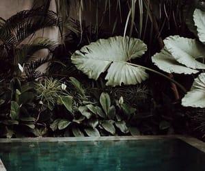 green, luxury, and greenery image