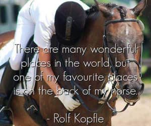 equestrian, horse riding, and horses image