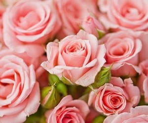 flowers, peachy, and nature image