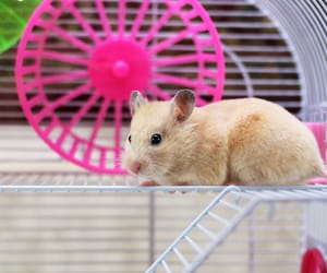 hamster and hamsters image