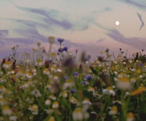 flowers, aesthetic, and landscape image
