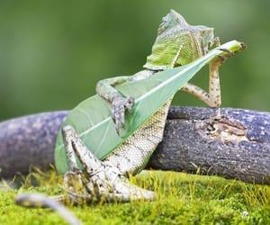 animal, lizard, and funny image