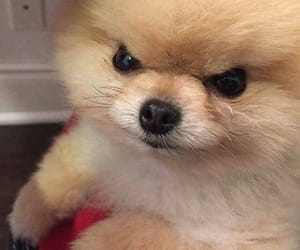 dog, cute, and meme image