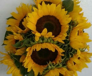 flores, flowers, and girasoles image