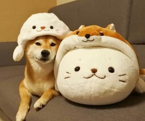 adorable, animals, and cat image