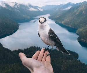 animal, bird, and landscape image