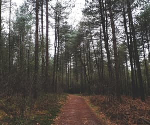 alone, woods, and autumn image