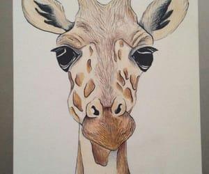 animal, drawing, and giraffe image