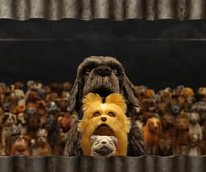 dog, movie, and stop motion image