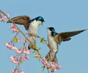 aesthetic, bird, and flowers image