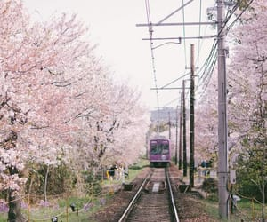 aesthetic, kyoto, and nature image