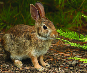 animals, bunny, and nature image