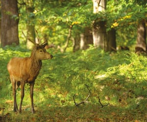 beautiful, deer, and forest image