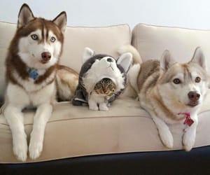 animals, beautiful, and kitten image