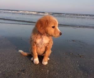 animals, beach, and beautiful image