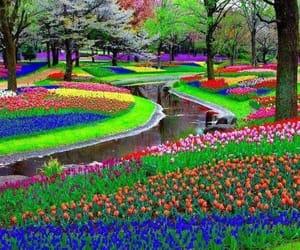 i̇stanbul lale bahçesi image