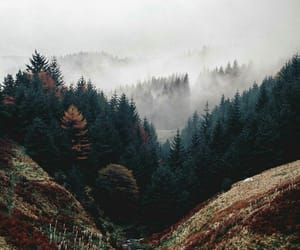 nature, forest, and fog image