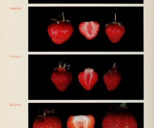 strawberry, fruit, and art image
