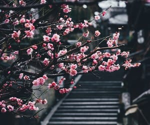 flowers, sakura, and japan image