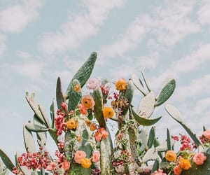 cactus, flowers, and beautiful image