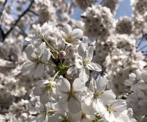 blossom, tree, and flowers image