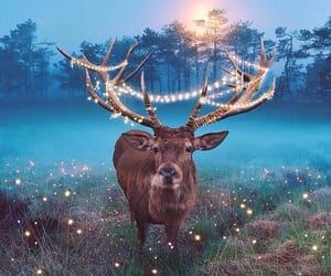 lights, lichter, and огни image