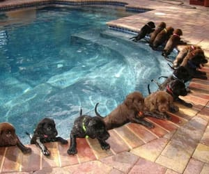 animals, dogs, and hunde image