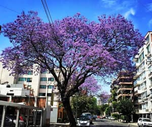 cities, flowers, and purple image
