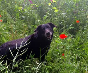 animal, dogs, and flowers image