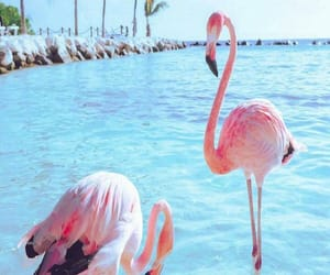flamingo and sea image