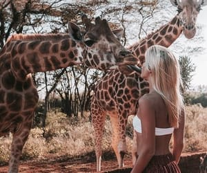 giraffe, girl, and blonde image