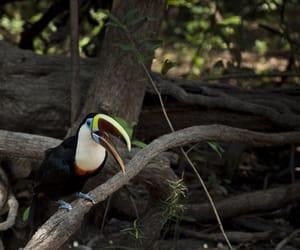 2010, amazonia, and brasil image