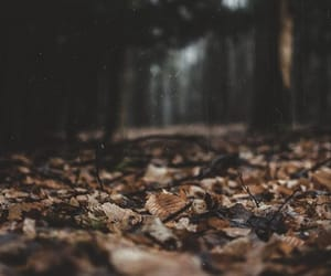 autumn, leaves, and forest image