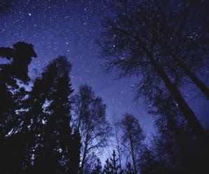 stars, tree, and night image
