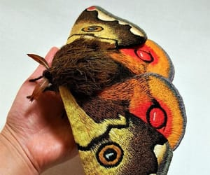 butterfly, crafts, and etsy image