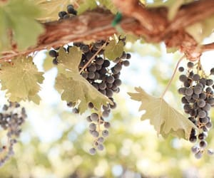dionysus, grapes, and greek image
