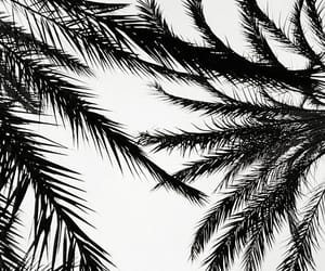black, black and white, and palm image