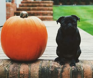 autumn, black, and pumpkin image