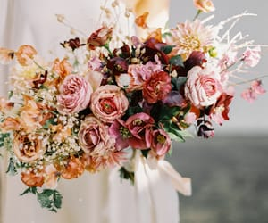 flowers, rose, and flower image