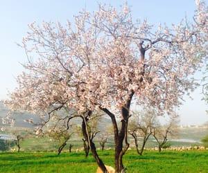 blue sky, palestine, and spring image