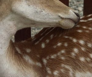 animal, deer, and bambi image