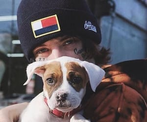 dog and lil xan image