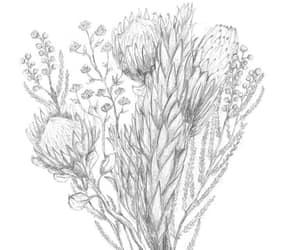 drawing, illustration, and marethcolleen image