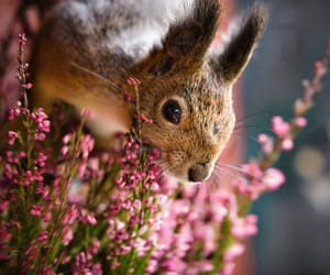 flowers and squirrel image